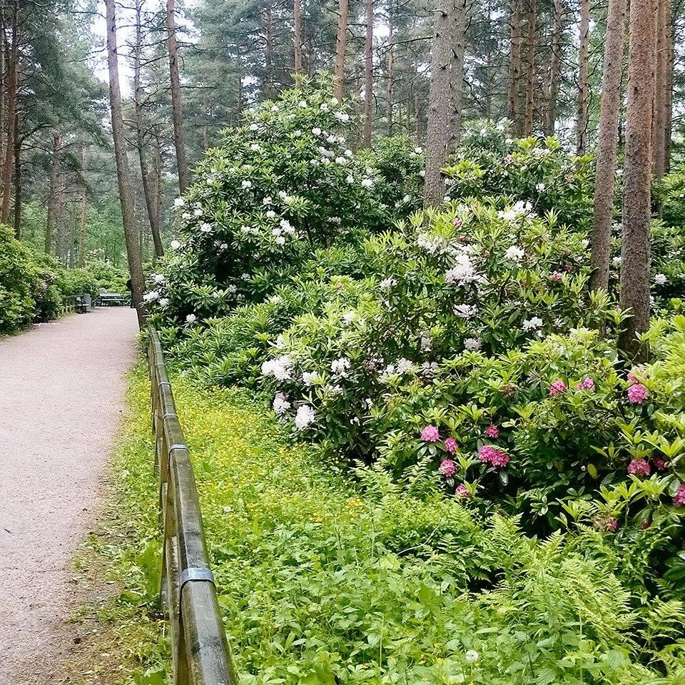 Rhododendrons | Alinan kotona blog