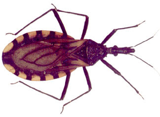 [imagetag] Hati-hati, Ada Serangga Penyebar AIDS !