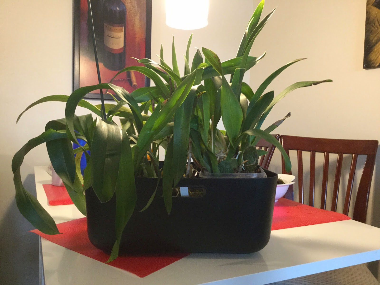 How Often You Should Water Orchids My Gardening