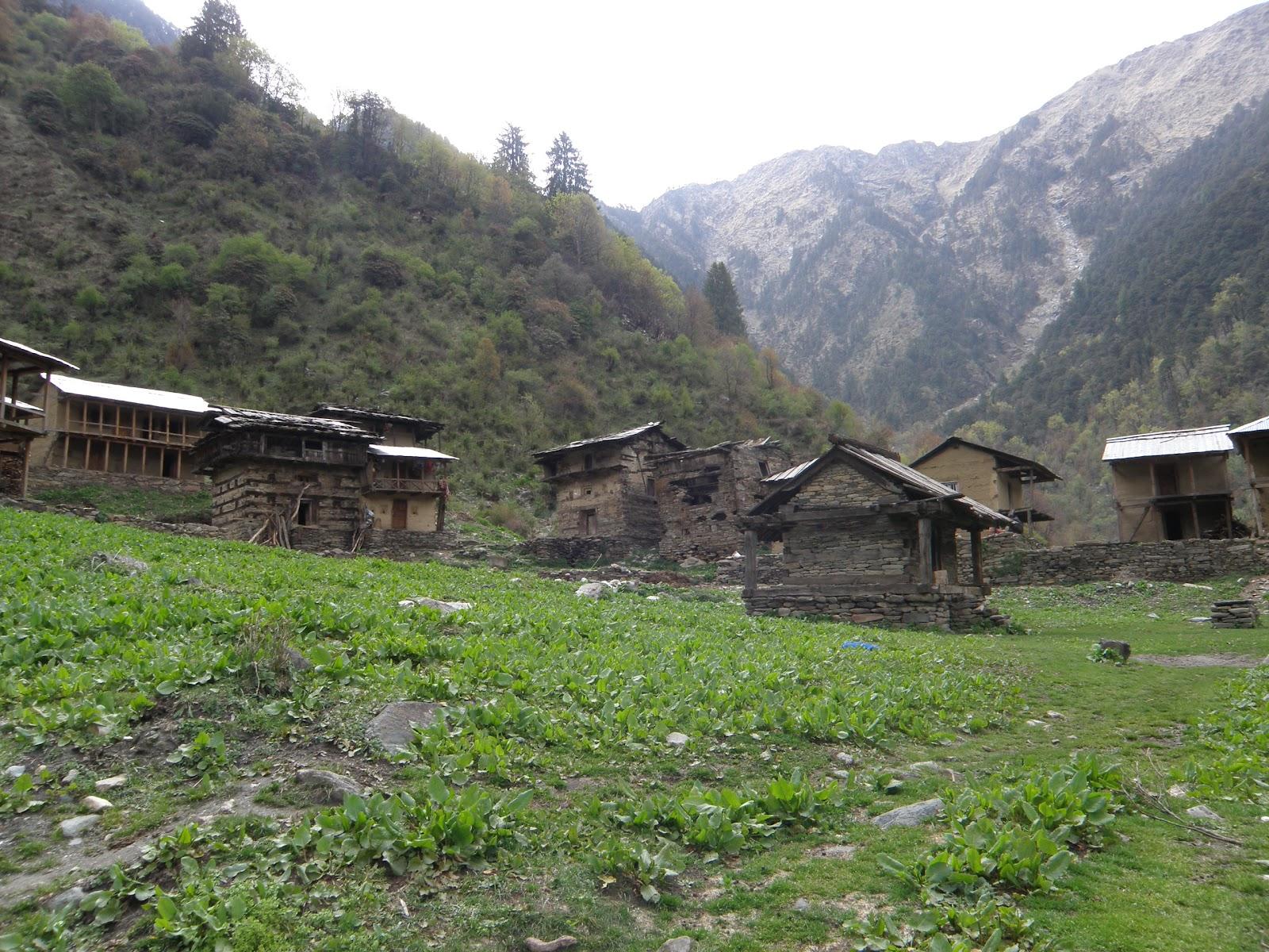 Forum Of Himalayan Studies