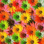 FIORI DEL MONDO (immagini fiori )