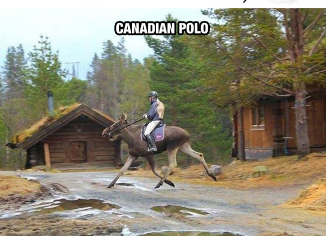 MOOSE! - Life In Canada Is So Much Different, And Colder, Than Life Anywhere Else.