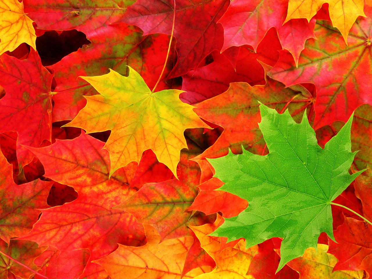 pemandangan: Autumn Leaves Wallpaper: tikabingodingdong.blogspot.com/2012/11/autumn-leaves-wallpaper.html