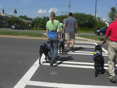 Picture of Rudy in coat/harness crossing a 'crosswalk' with me