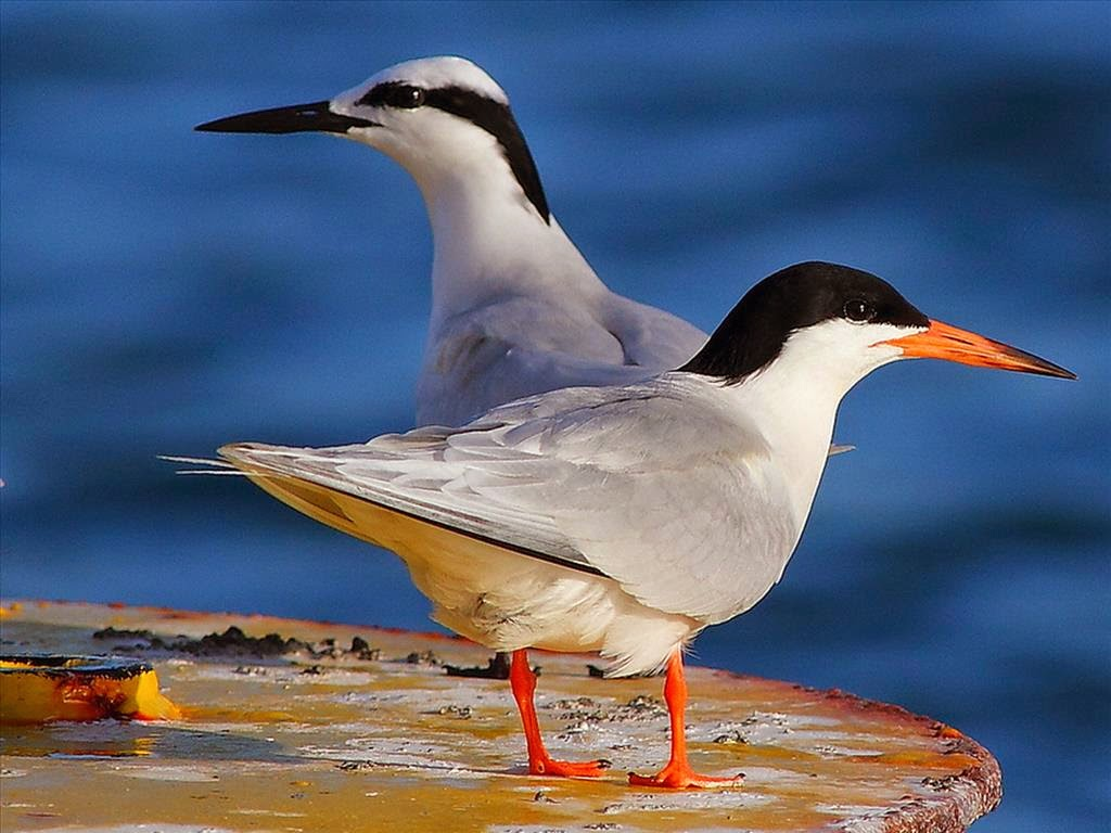 Hình ảnh chim mòng biển đẹp tuyệt vời