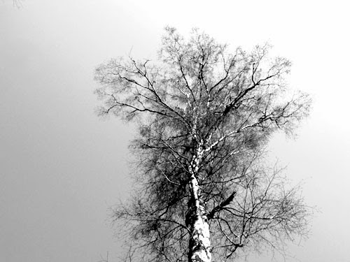 Graphic Art in Nature 4 - black and white photography
