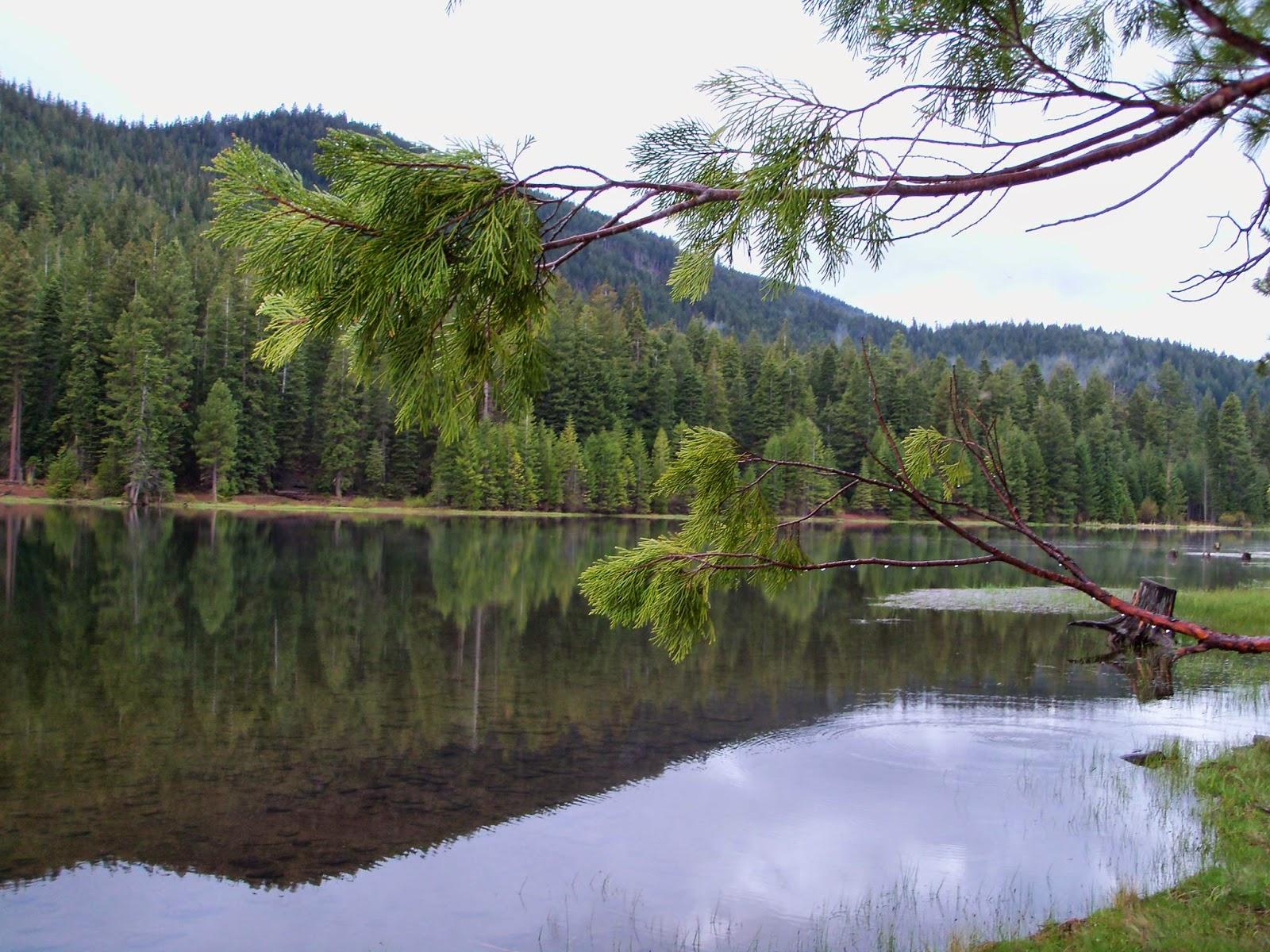 Siskiyou county camping juanita lake campground for Lake siskiyou resort cabins