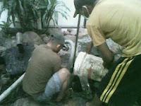 http://sedot-wc-malang.blogspot.com