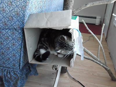 tabby cat in cat box