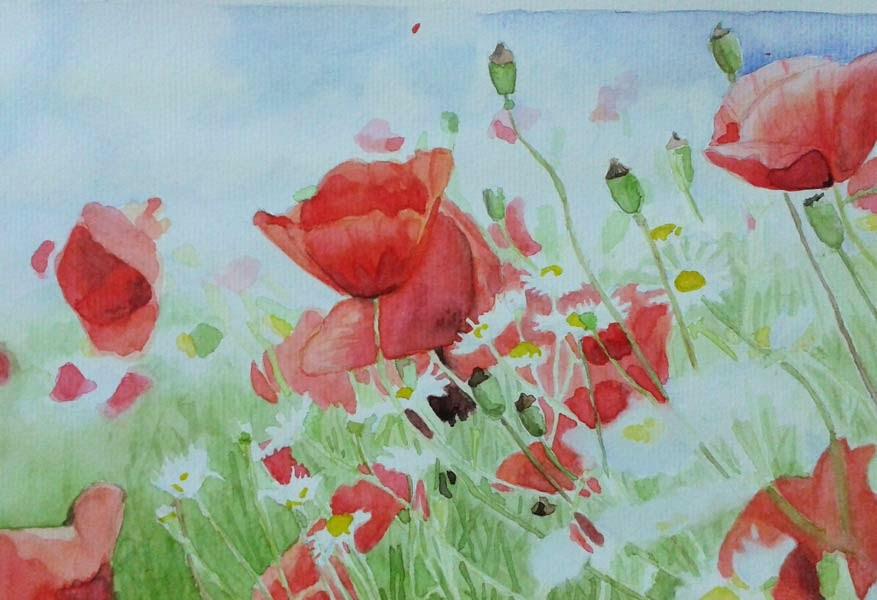 poppies and daisies watercolour