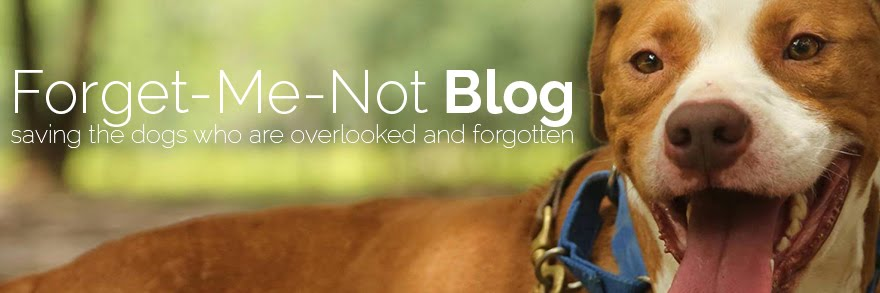 Forget-Me-Not Blog
