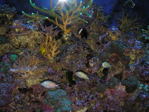 Las esquinas de tu boca jard n en el fondo del mar for Jardin 5 esquinas