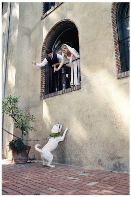 novios saludando al perro blanco