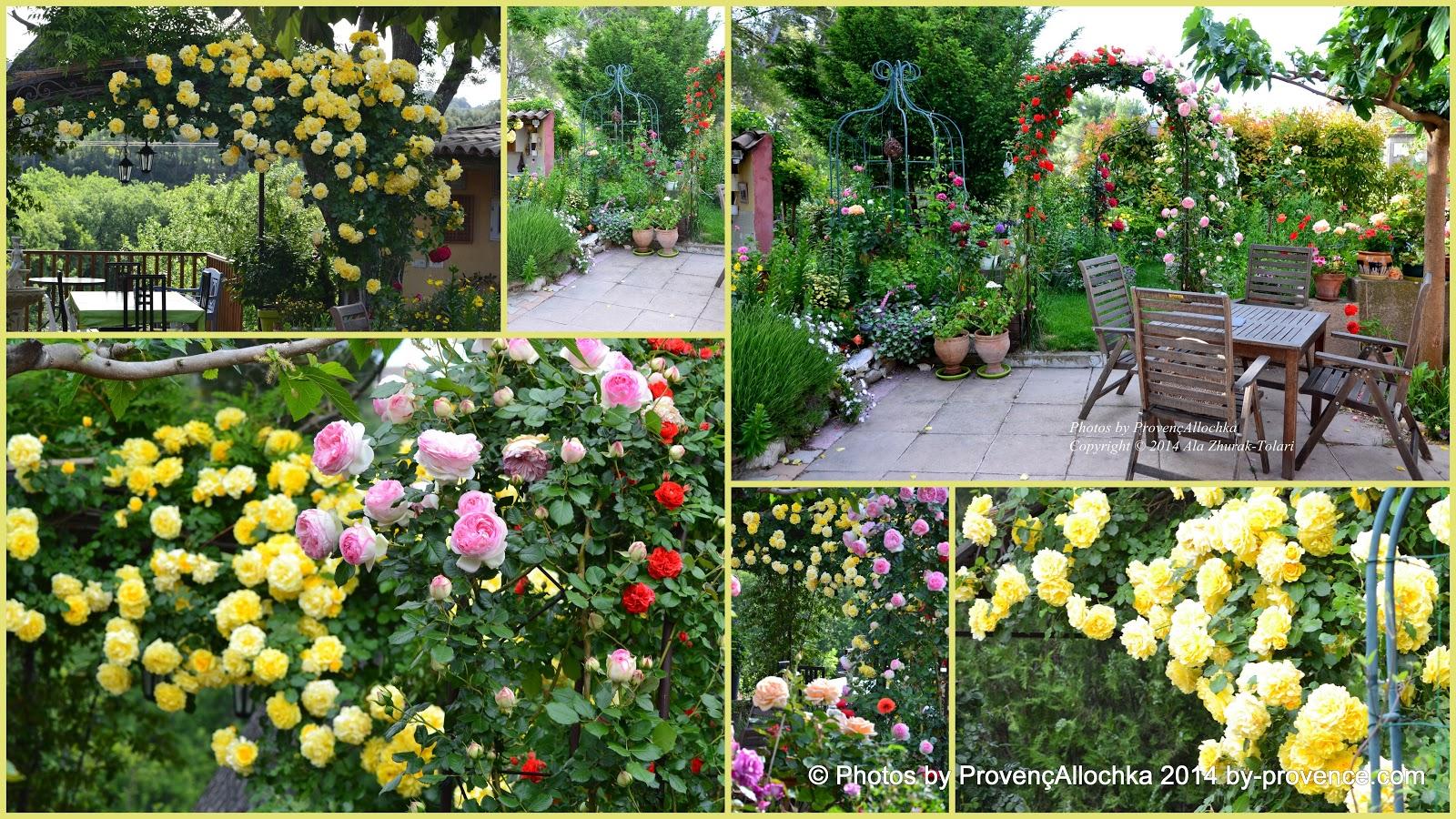 rose,roses