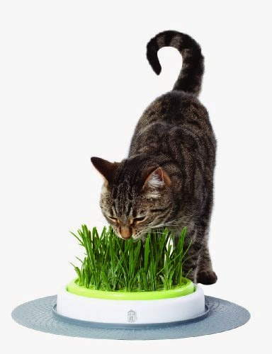 cat grass from Amazon
