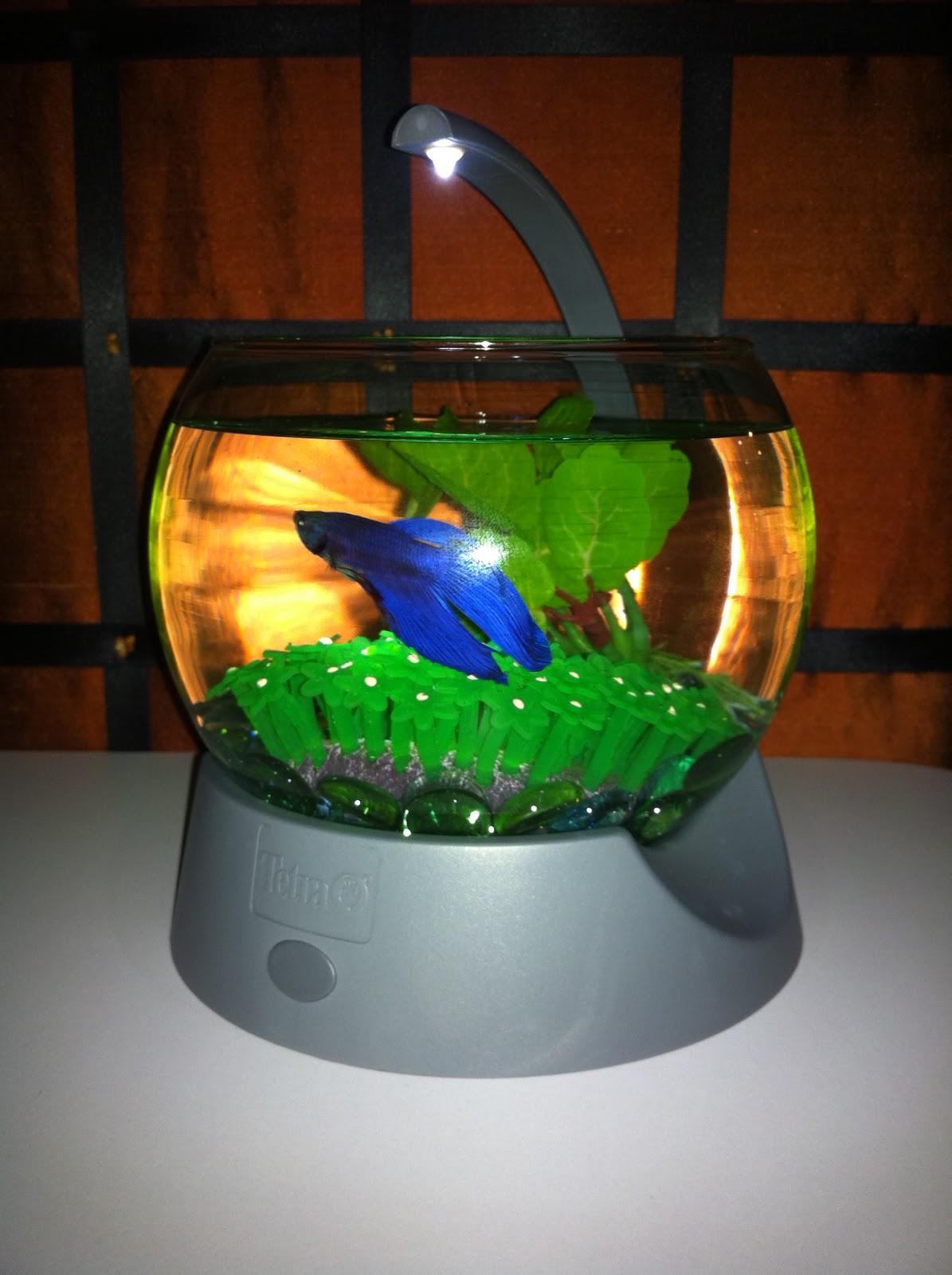 Pet Fish Petco Freshwater Pet Fish Petco Pet Fish Invade
