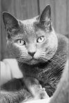 Poesía - Las siete vidas del gato