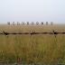 Wildeornes- Self Titled