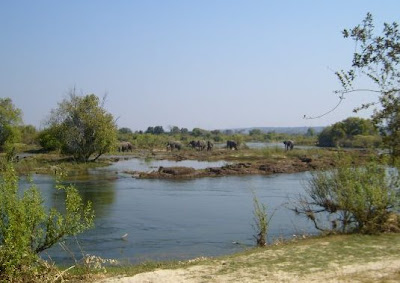 African-Zambezi-Elephants
