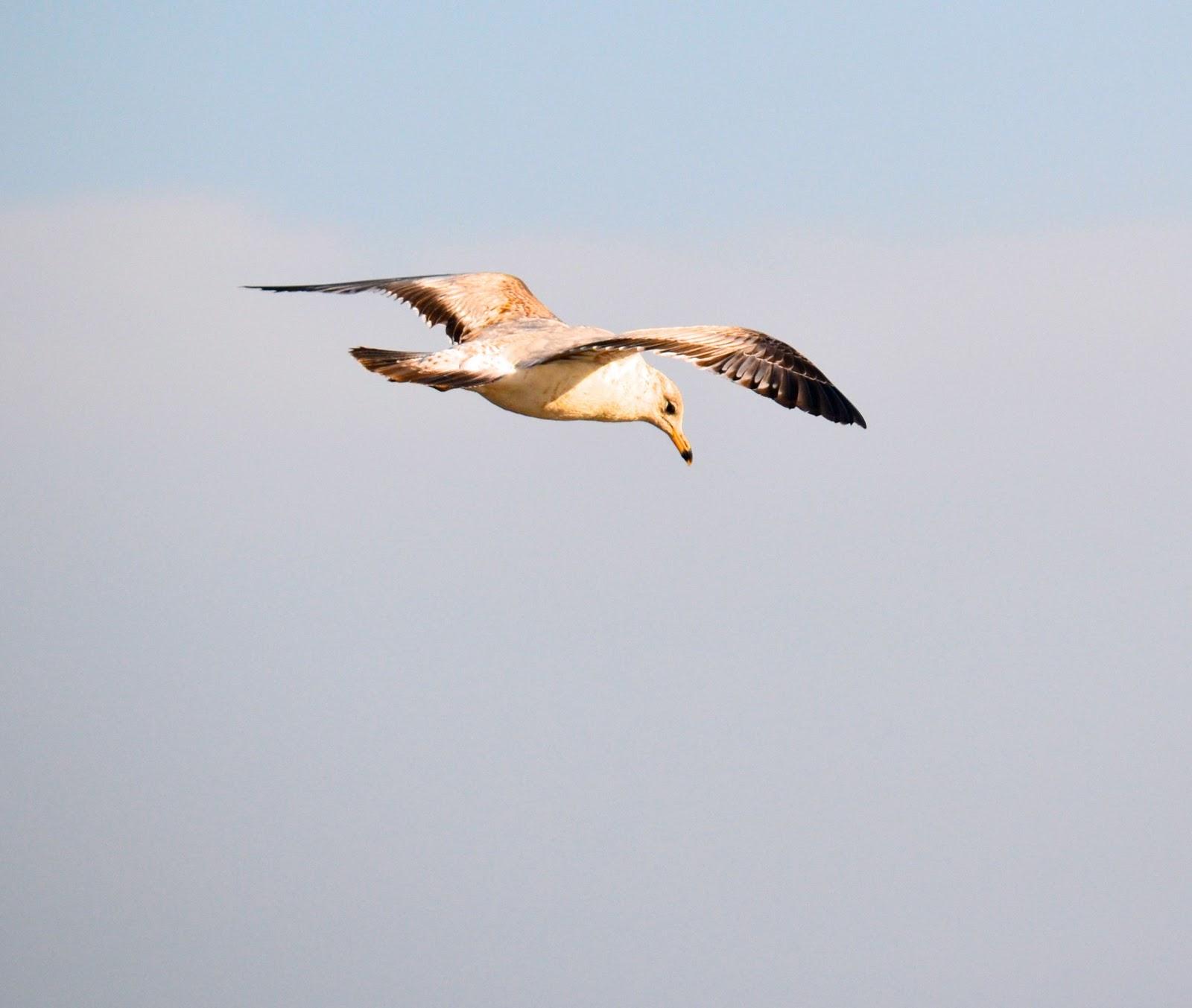 A SCRAPBOOK OF INSPIRATION: Cape Cod Inspiration