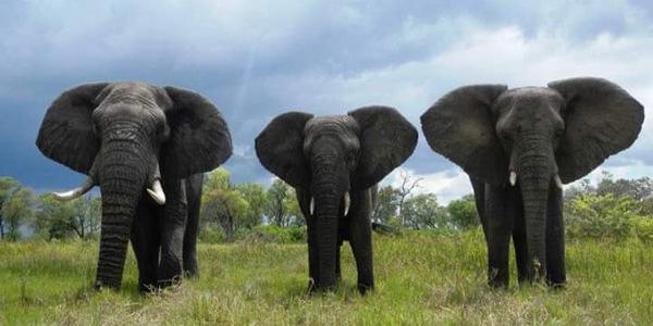 TRIPS IN UGANDA