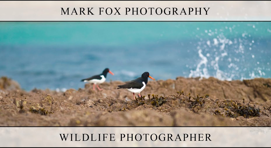 Mark Fox Photography