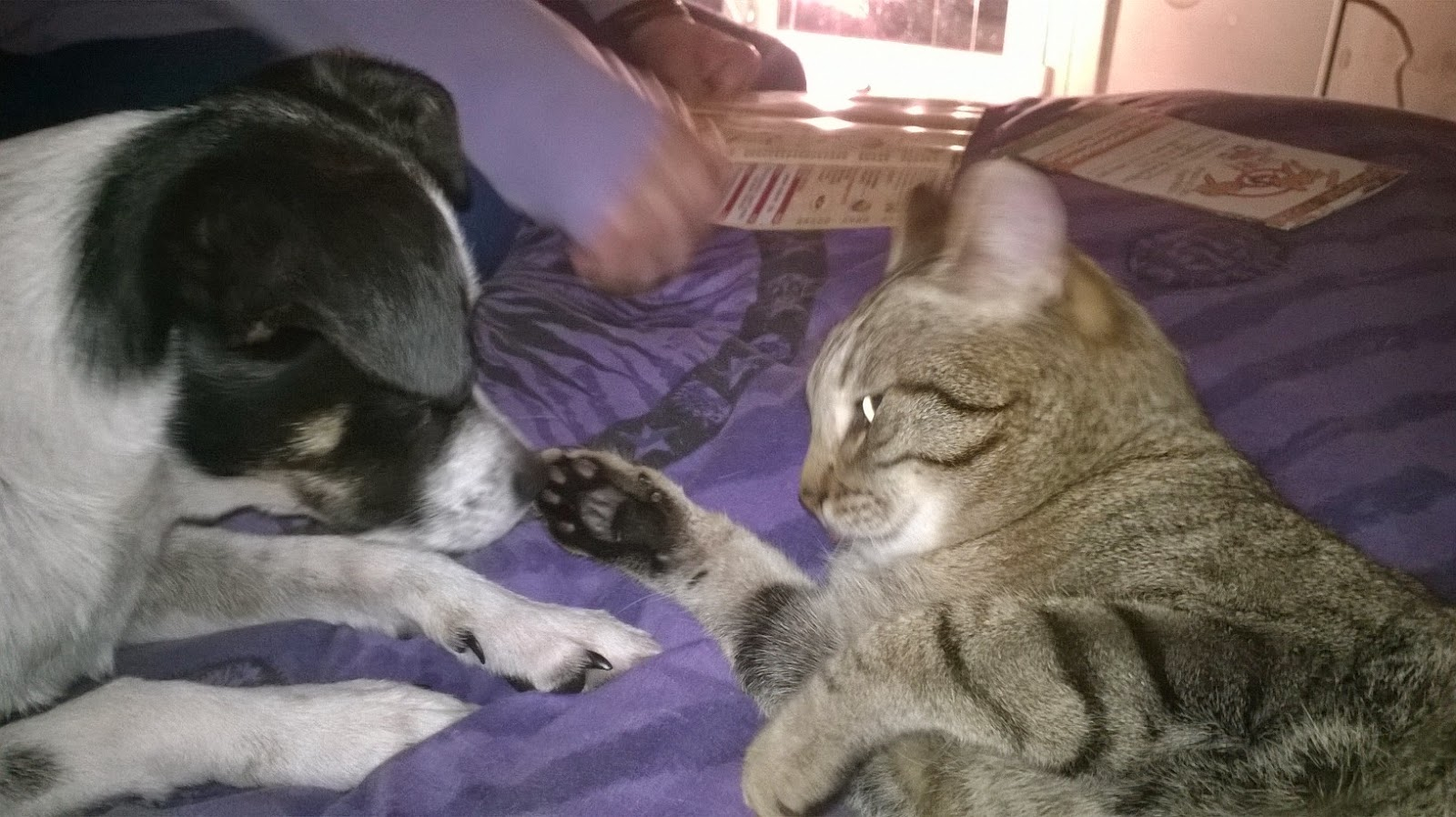 Le cronache animali curiosit il linguaggio della coda for Il linguaggio dei gatti