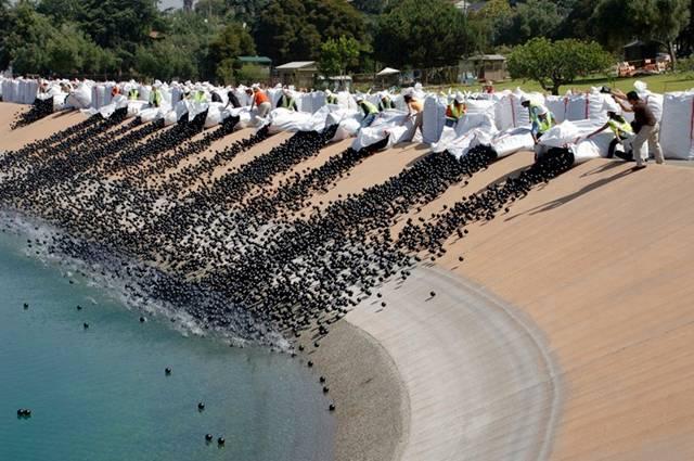 400000 Black Balls Save Los Angeles Reservoir