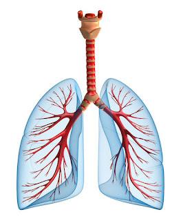 Stiri medicale despre eficienta tratamentului pneumoniei la domiciliu