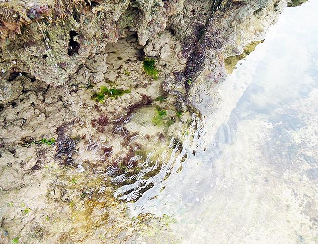 Corais de Pontal do Coruripe - Alagoas