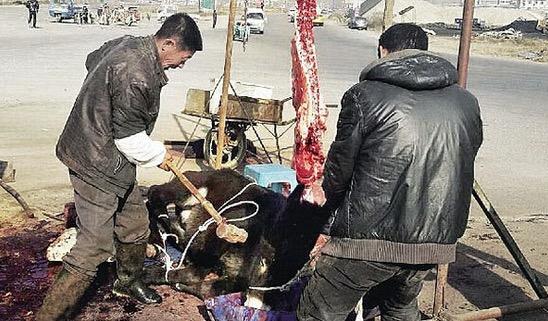 Pasar Segar di China yang Kejam dan Mengerikan