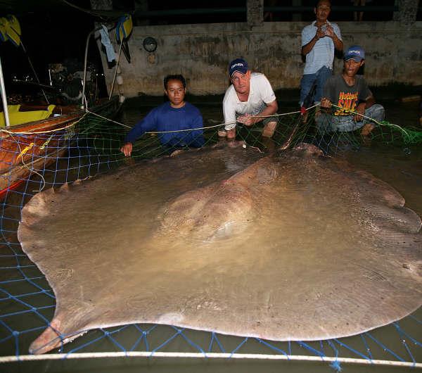 Ikan pari air tawar - ikan sungai terbesar