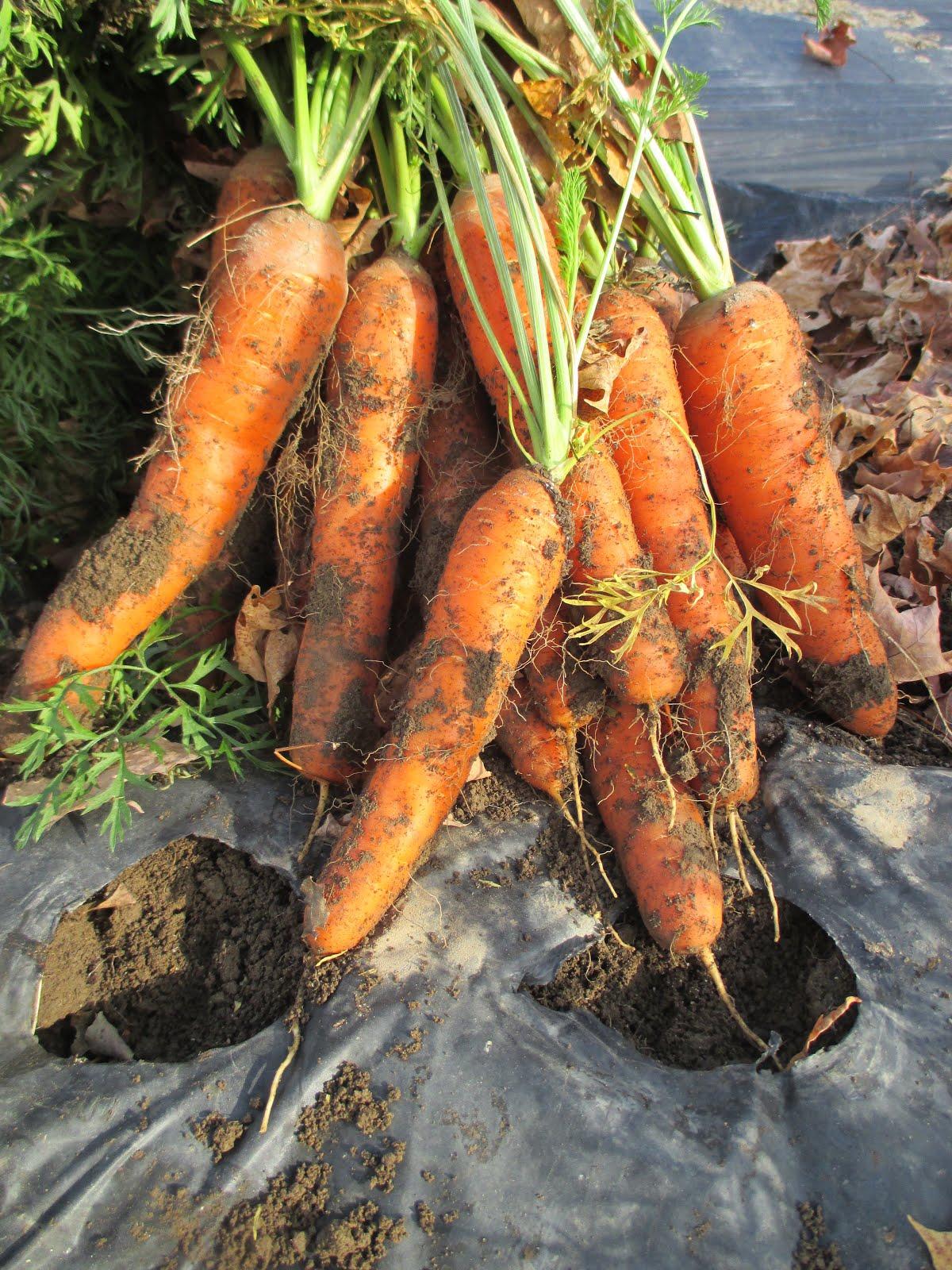 whizbang gardening whizbang gardening now has a facebook page