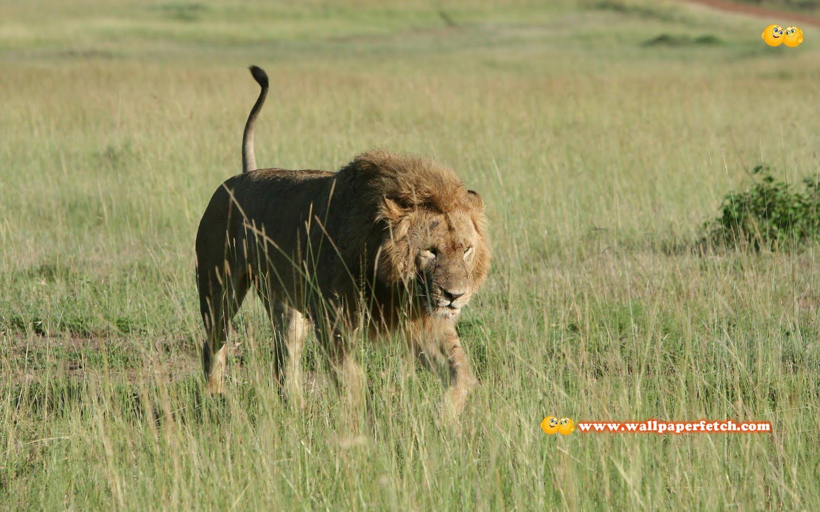 http://2.bp.blogspot.com/-B1jtE2uJjlc/TyFWY8qH7CI/AAAAAAAAE2k/1YMesPbpGvQ/s1600/SuperPack_Beautiful_Animals_HD_Wallpapers_Part_32.46.jpg