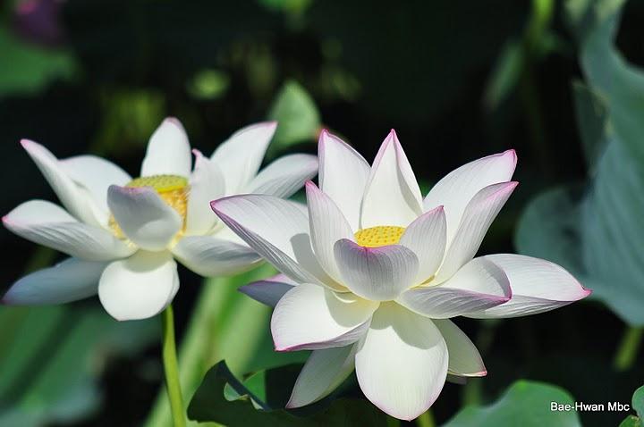 Sinonimos y antonimos todo lo que buscas flores muy - Fotos flores bellas ...