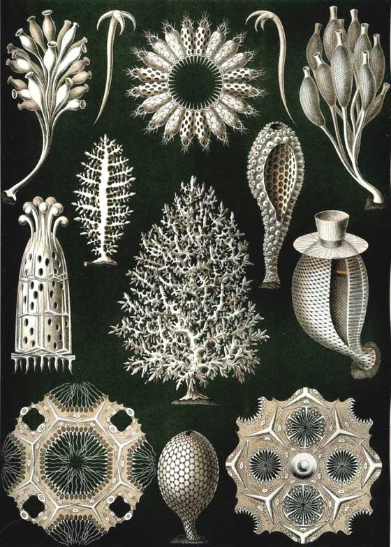 patternprints journal  spectacular patterns in ernst