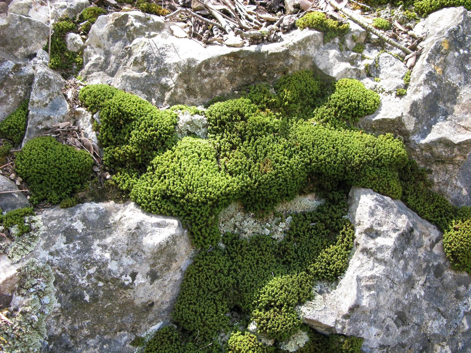 el signo de la libertad piedra y musgo