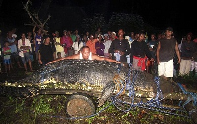giant crocodile of 20.24 feet long was captured alive in Philippines.