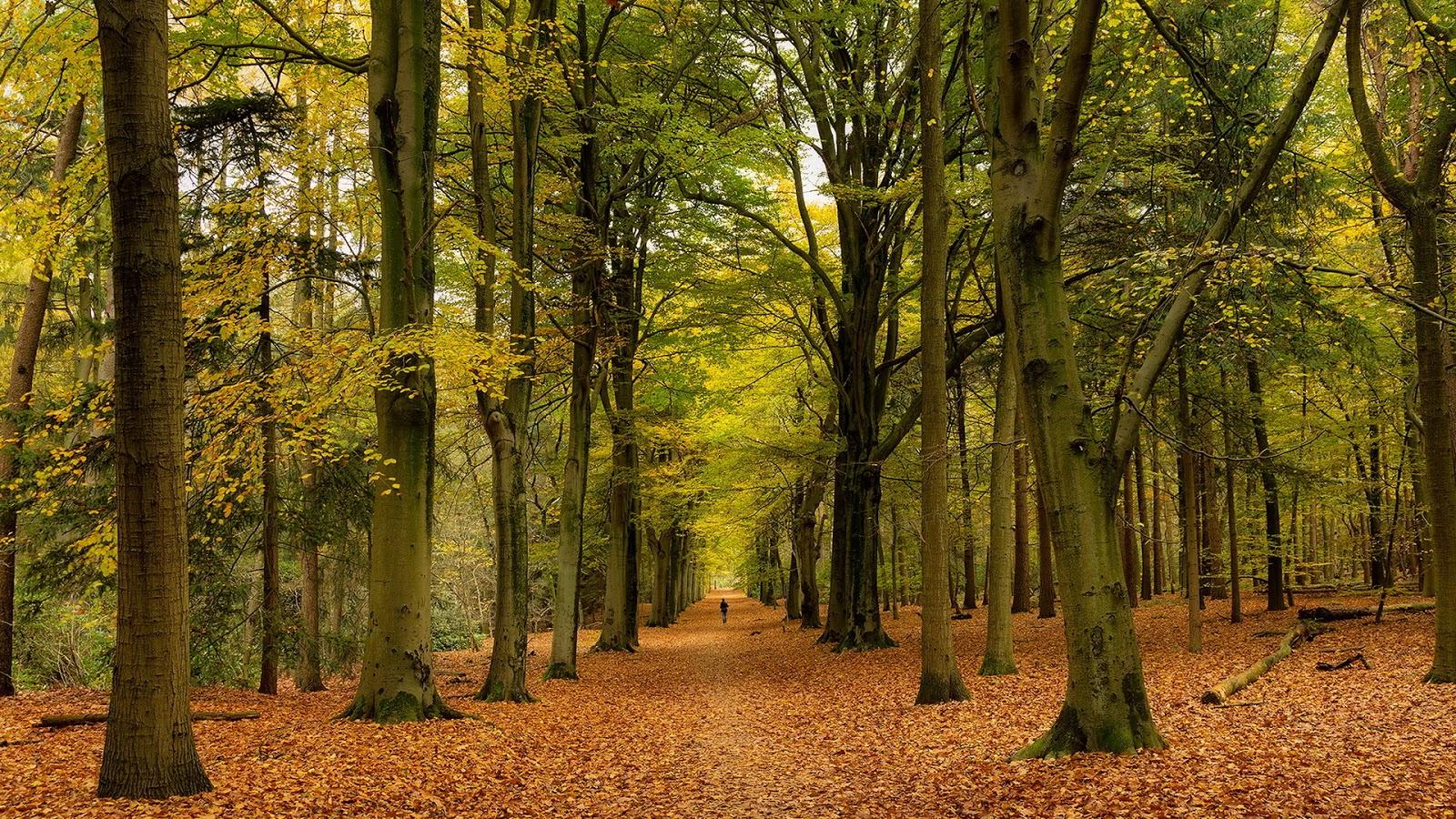 Красивые картинки природы осенью