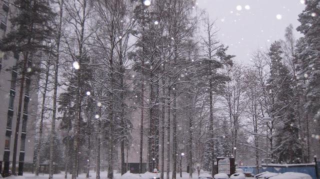 kortepohja talvella