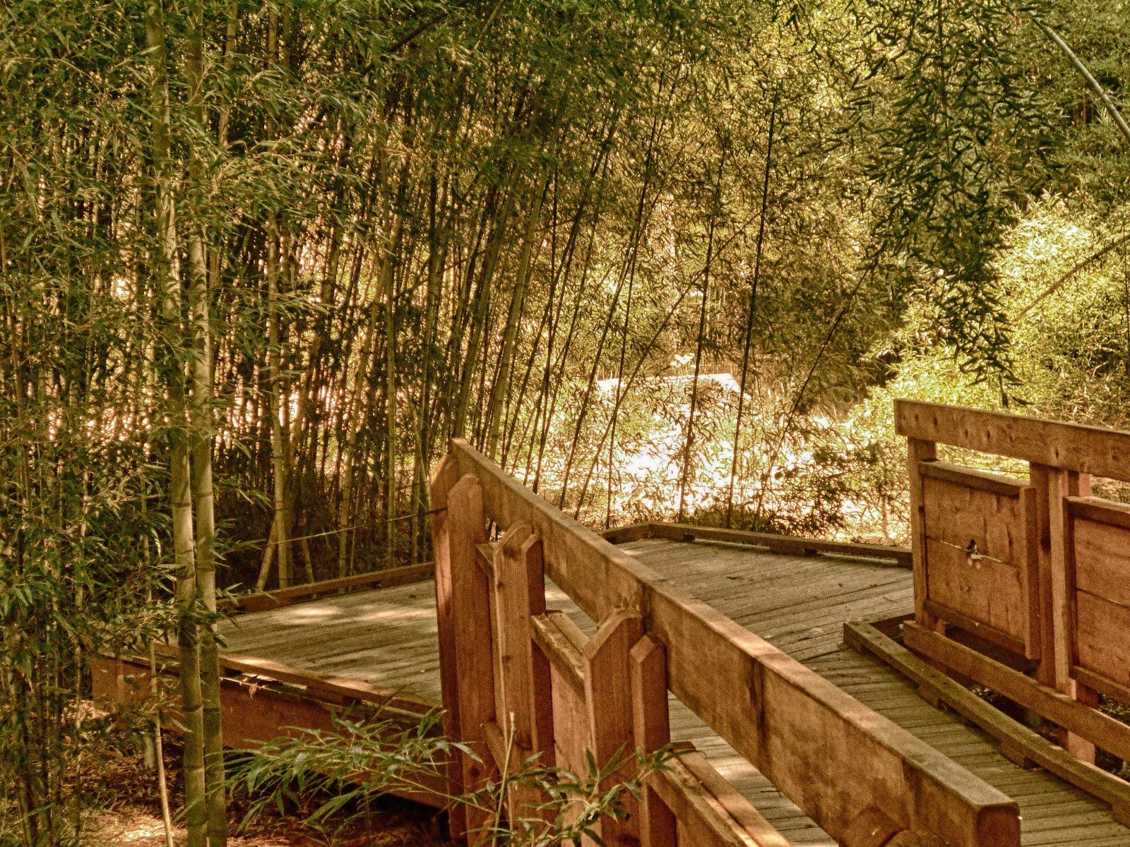 HHS Digital Photo Blog: Sophia J- Under the Bamboo Trees