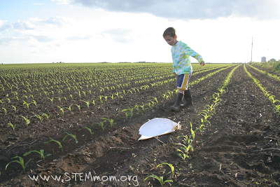 Boy walking down rows of 1-week old seed corn sprouts