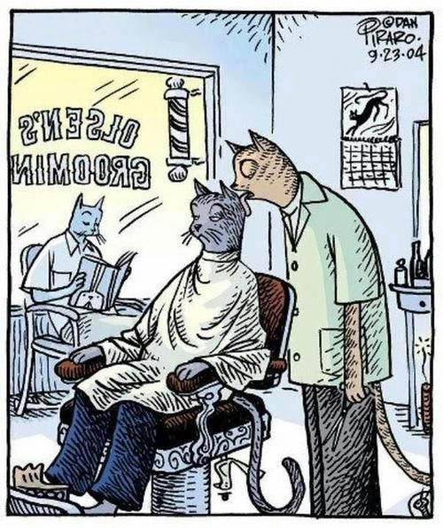 Funny Jokes n Pictures : Cat Barber Grooming Hair Cartoon