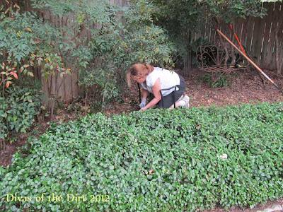 Divasofthedirt,redo jasmine fern bed
