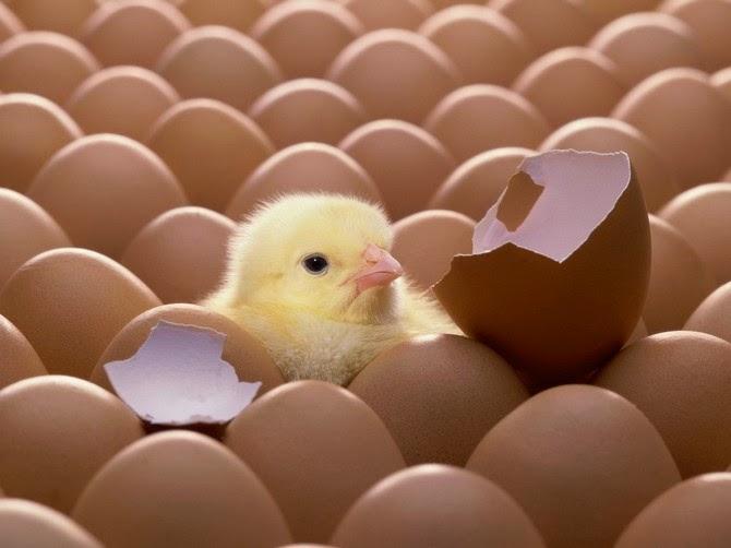 Хранение яиц