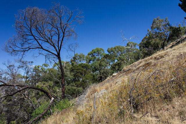 steep hillside near southern ridge track