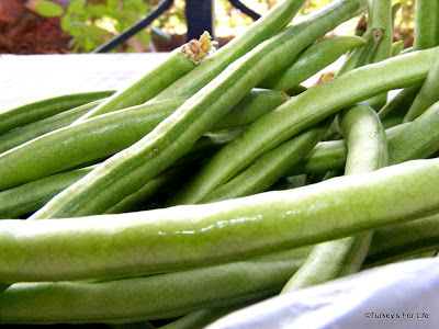 Seasonal Turkish Green Beans