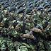 Kekuatan Militer Indonesia No 14 Dunia