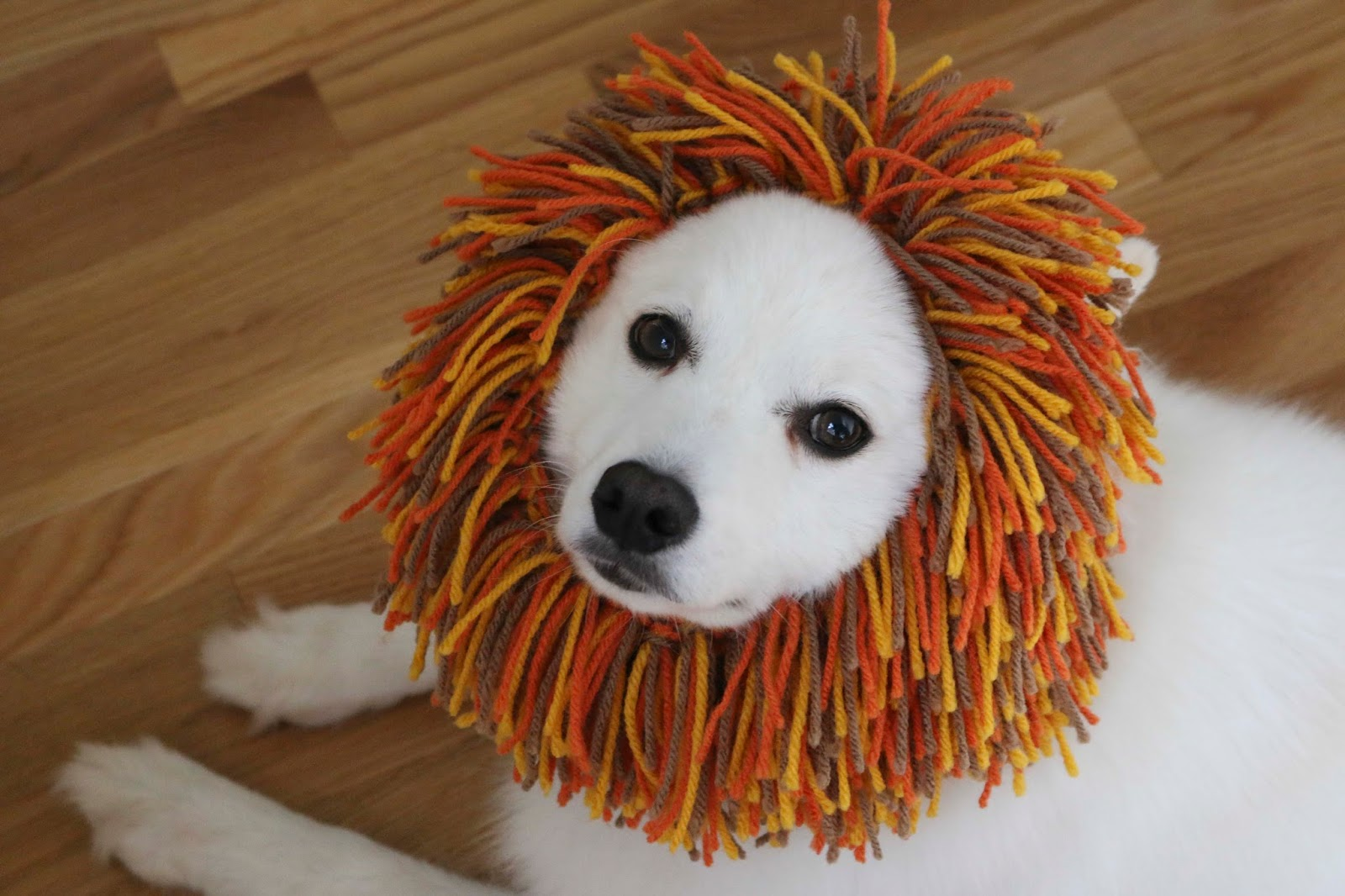Chemknits A Puppys Lion Snood For Halloween