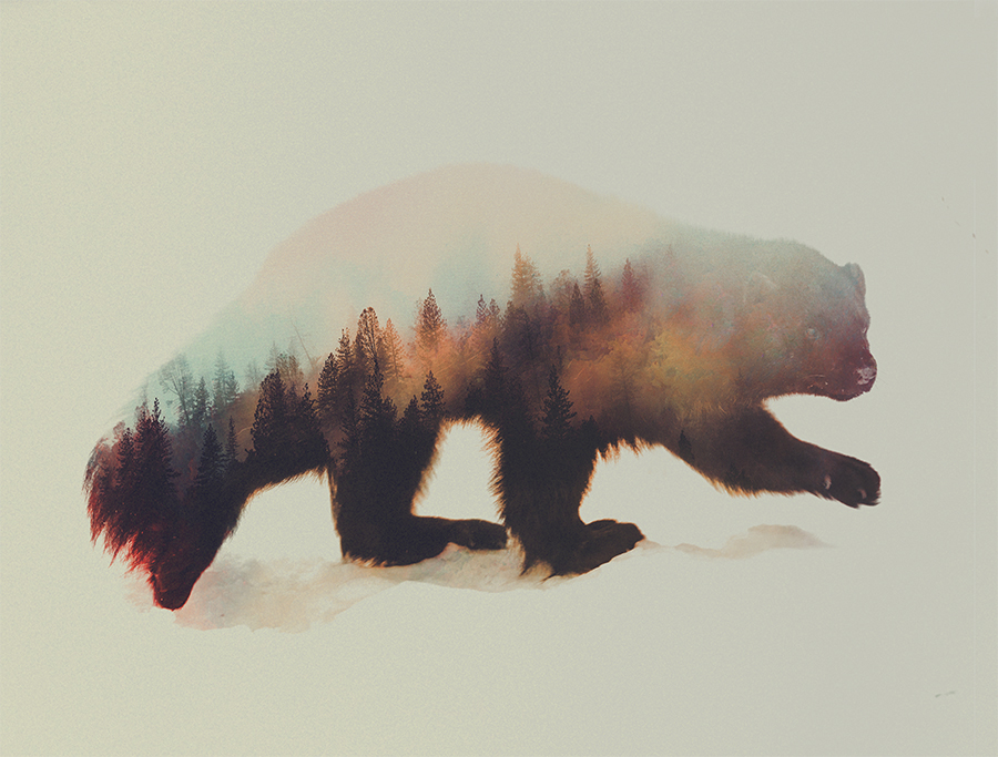 14-Wolverine-Andreas-Lie-Animals-in-Photographic-Double-Exposures-www-designstack-co